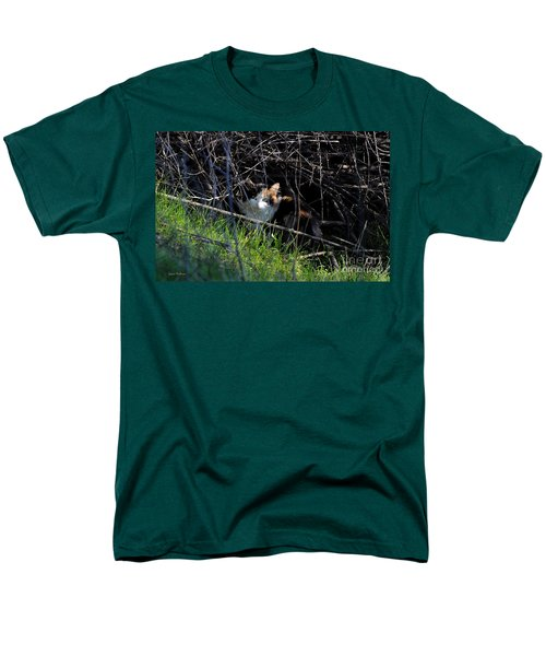 Frightened Feral Calico  Men's T-Shirt  (Regular Fit) by Susan Wiedmann