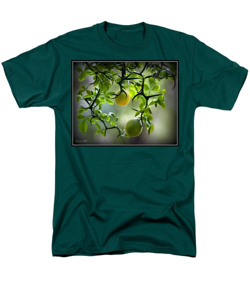 Japanese Orange Tree Men's T-Shirt  (Regular Fit)