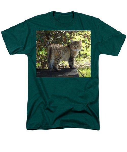 Timber The Kitten Men's T-Shirt  (Regular Fit) by Barbie Batson