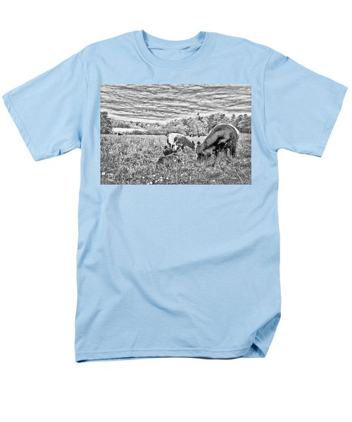 Belted Galloway Beef Cattle Men's T-Shirt  (Regular Fit) by Daniel Hebard