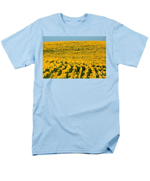 Sunflowers Galore Men's T-Shirt  (Regular Fit) by Catherine Sherman