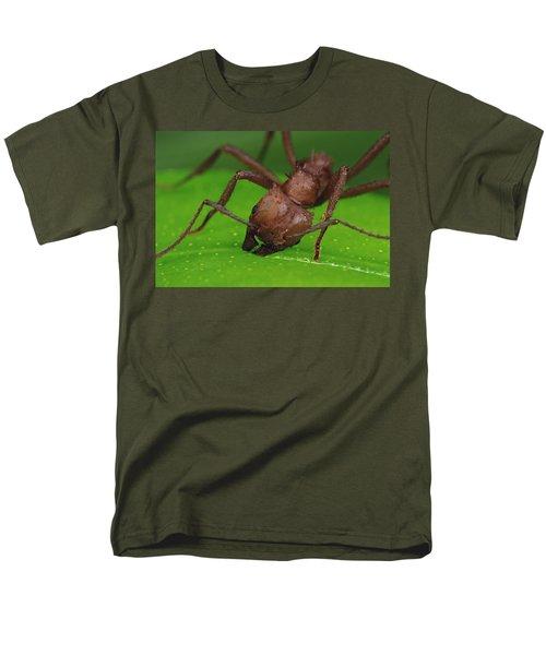 Leafcutter Ant Cutting Papaya Leaf Men's T-Shirt  (Regular Fit) by Mark Moffett