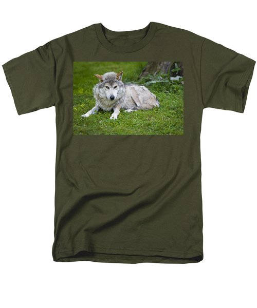 Mexican Gray Wolf Men's T-Shirt  (Regular Fit) by Sebastian Musial