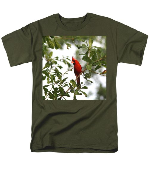 Northern Cardinal - In The Wind Men's T-Shirt  (Regular Fit) by Travis Truelove