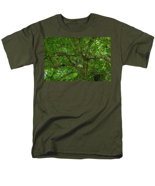 Old Linden Tree. Men's T-Shirt  (Regular Fit)