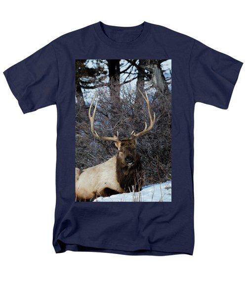 Wyoming Elk Men's T-Shirt  (Regular Fit)