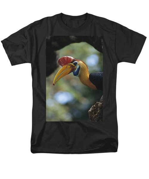 Sulawesi Red-knobbed Hornbill Male Men's T-Shirt  (Regular Fit) by Tui De Roy
