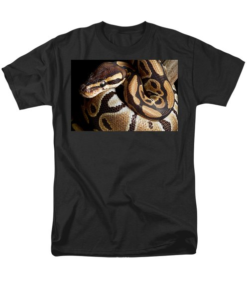 Ball Python Python Regius Men's T-Shirt  (Regular Fit) by David Kenny