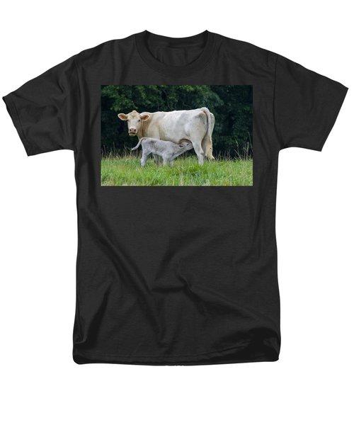 Charolais Cattle Nursing Young Men's T-Shirt  (Regular Fit) by Chris Flees