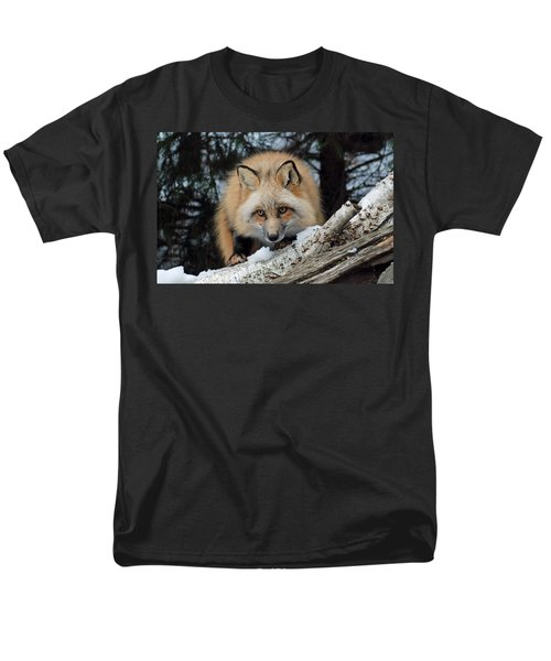 Curious Fox Men's T-Shirt  (Regular Fit) by Richard Bryce and Family
