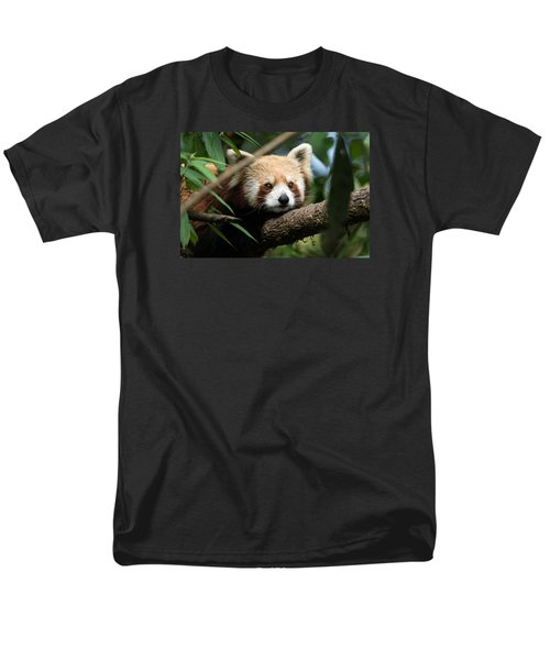 Cute Panda Men's T-Shirt  (Regular Fit) by Fotosas Photography