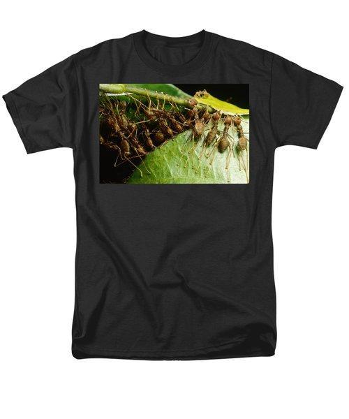 Weaver Ant Group Binding Leaves Men's T-Shirt  (Regular Fit) by Mark Moffett