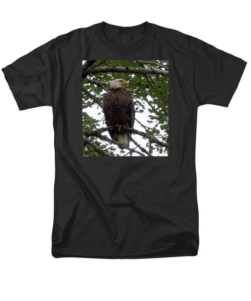 Eagle At Hog Bay Maine Men's T-Shirt  (Regular Fit) by Francine Frank