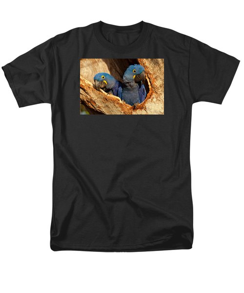 Hyacinth Macaw Pair In Nest Men's T-Shirt  (Regular Fit) by Aivar Mikko