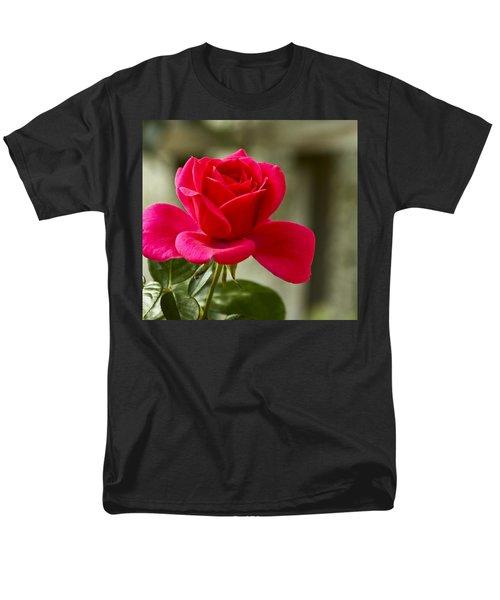 Red Rose Wall Art Print Men's T-Shirt  (Regular Fit) by Carol F Austin