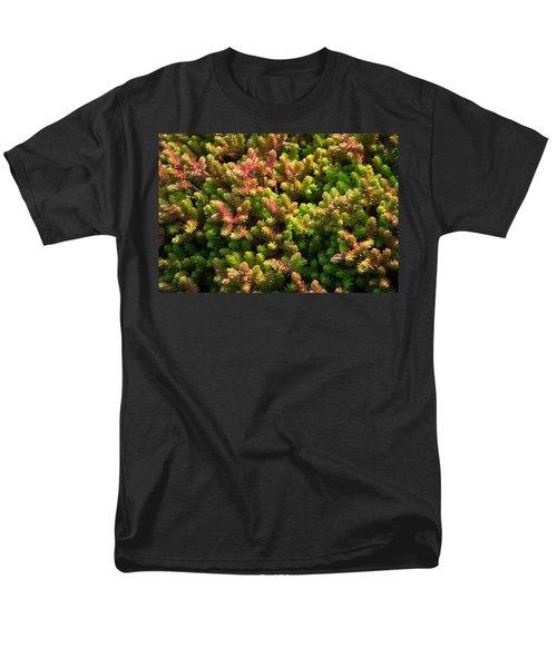 Succulents Men's T-Shirt  (Regular Fit) by Catherine Lau