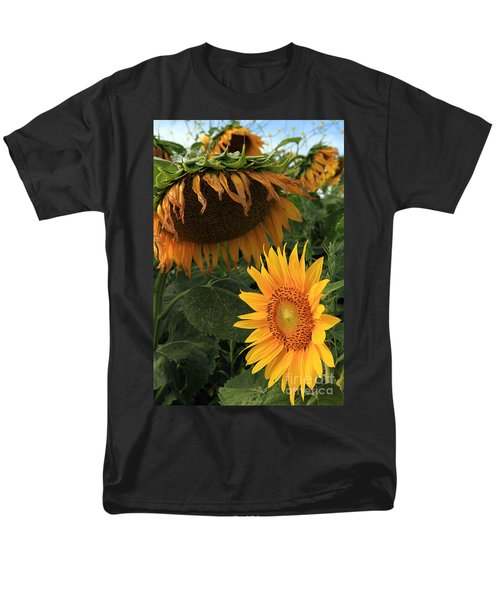 Sun Flowers  Past  And  Present  Men's T-Shirt  (Regular Fit)