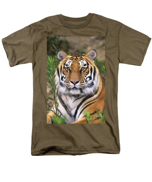 Siberian Tiger Staring Endangered Species Wildlife Rescue Men's T-Shirt  (Regular Fit) by Dave Welling