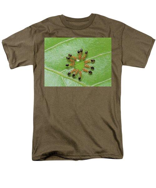 Ant Monomorium Intrudens Group Drinking Men's T-Shirt  (Regular Fit) by Takashi Shinkai