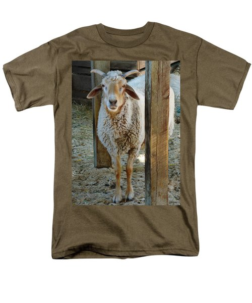 Awassi Sheep Men's T-Shirt  (Regular Fit) by Steve Taylor