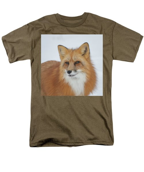 Curious Fox Men's T-Shirt  (Regular Fit) by Jack Bell