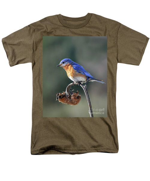 Eastern Bluebird In Spring Men's T-Shirt  (Regular Fit) by Amy Porter
