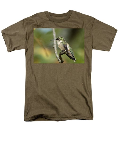 Female Ruby-throated Hummingbird On Branch Men's T-Shirt  (Regular Fit) by Sheila Brown