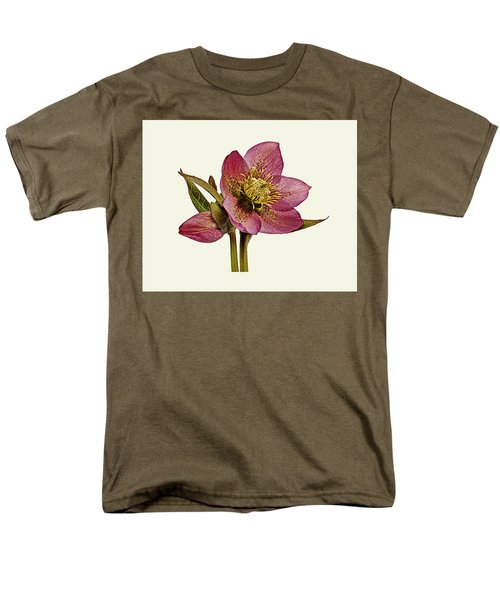 Red Hellebore Cream Background Men's T-Shirt  (Regular Fit) by Paul Gulliver