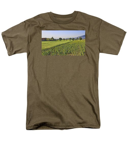 Sunflowers Of Tuscany Men's T-Shirt  (Regular Fit) by Allan Levin
