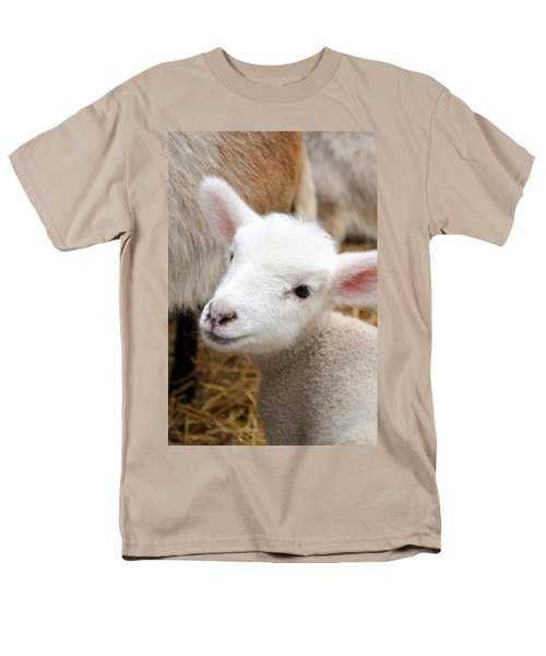 Lamb Men's T-Shirt  (Regular Fit) by Michelle Calkins