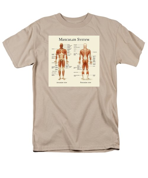 Muscular System Men's T-Shirt  (Regular Fit) by Gina Dsgn