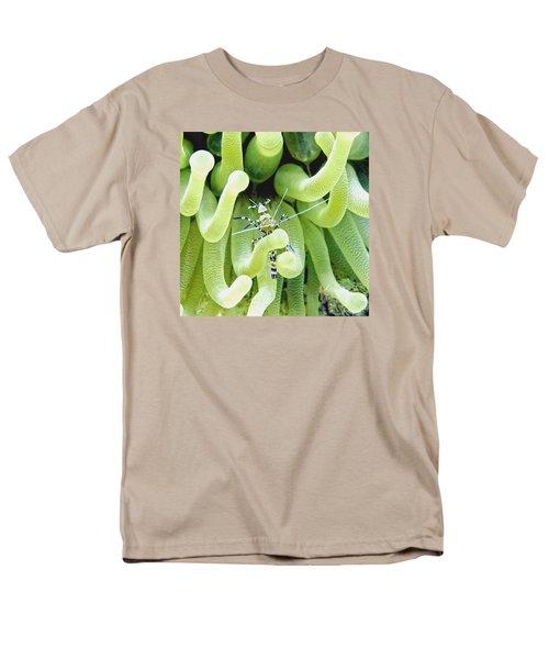 Shrimp And The Anemone Men's T-Shirt  (Regular Fit)