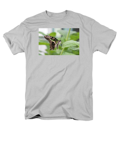 Tailed Jay Butterfly #3 Men's T-Shirt  (Regular Fit)