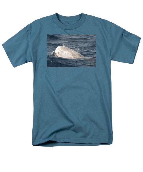 Risso Dolphin Men's T-Shirt  (Regular Fit)