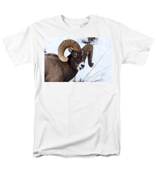 Bighorn Sheep Men's T-Shirt  (Regular Fit)