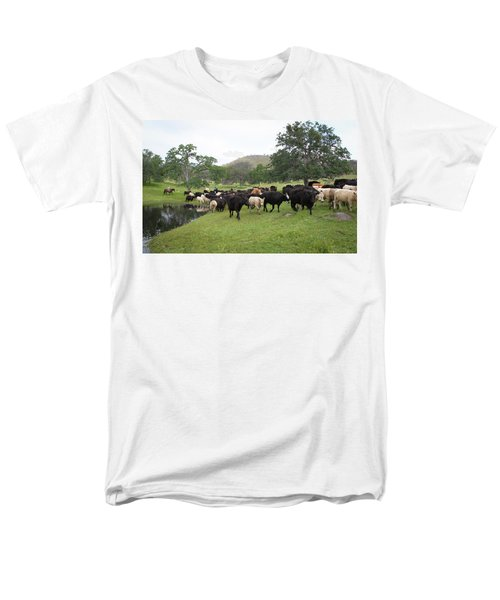 Cattle Men's T-Shirt  (Regular Fit) by Diane Bohna