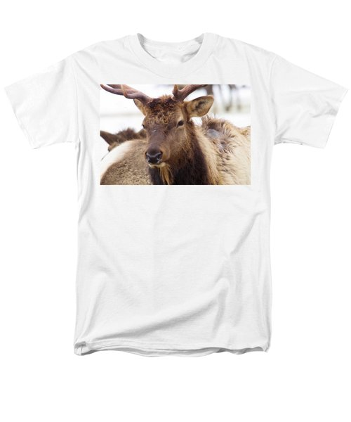 Men's T-Shirt  (Regular Fit) featuring the photograph Gaze From A Bull Elk by Jeff Swan