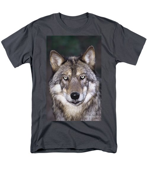 Gray Wolf Portrait Endangered Species Wildlife Rescue Men's T-Shirt  (Regular Fit) by Dave Welling