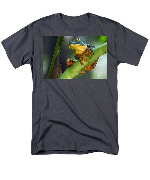 Agalychnis Calcarifer 4 Men's T-Shirt  (Regular Fit) by Arterra Picture Library