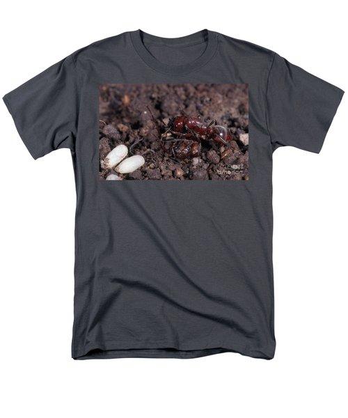 Ant Queen Fight Men's T-Shirt  (Regular Fit) by Gregory G. Dimijian, M.D.