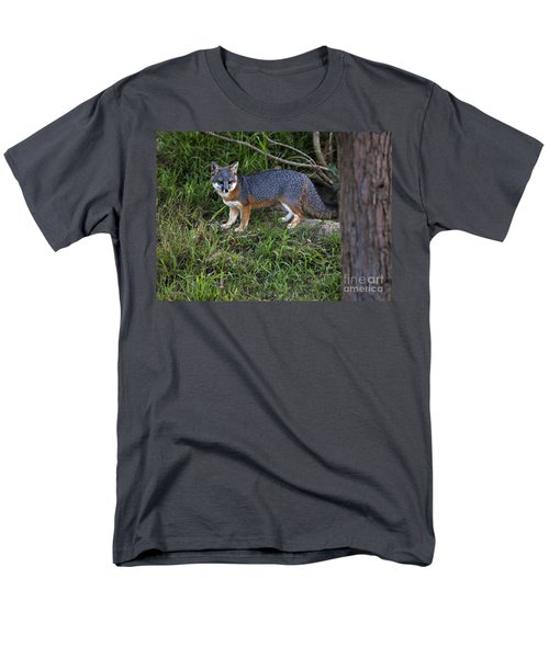 Channel Island Fox Men's T-Shirt  (Regular Fit) by David Millenheft