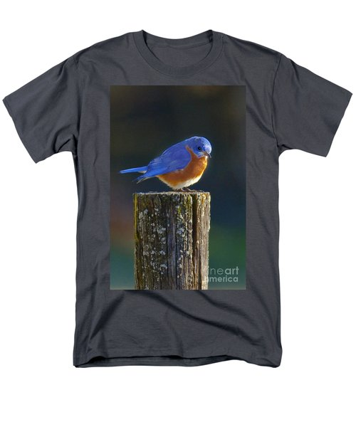 Male Bluebird Men's T-Shirt  (Regular Fit) by Ronald Lutz