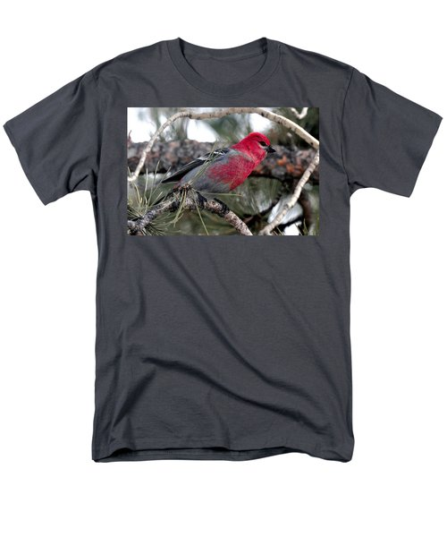 Pine Grosbeak On Ponderosa Pine Tree Men's T-Shirt  (Regular Fit) by Marilyn Burton