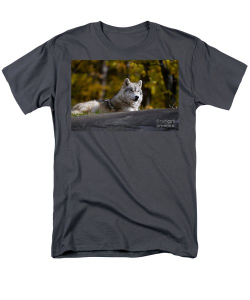 Men's T-Shirt  (Regular Fit) featuring the photograph Resting Arctic Wolf On Rocks by Wolves Only