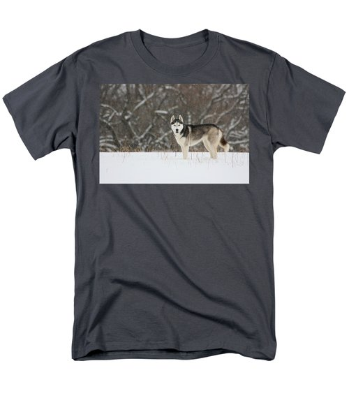 Siberian Husky 20 Men's T-Shirt  (Regular Fit) by David Dunham