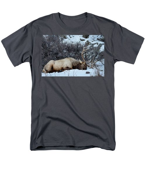 Sleeping Elk Men's T-Shirt  (Regular Fit)