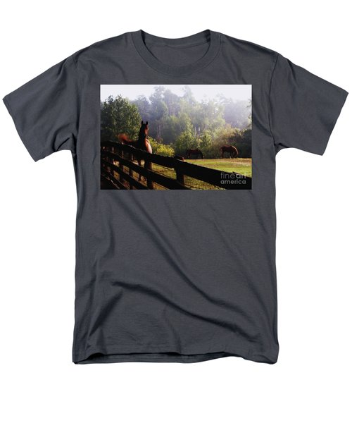 Arabian Horses In Field Men's T-Shirt  (Regular Fit) by Debra Crank