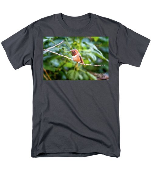 Humming Bird On Stick Men's T-Shirt  (Regular Fit) by Stephanie Hayes