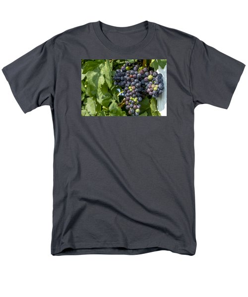 Red Wine Grapes On The Vine Men's T-Shirt  (Regular Fit) by Teri Virbickis