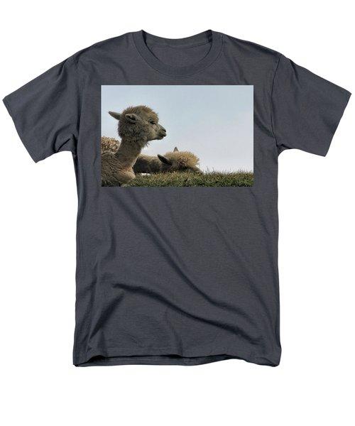 Two Alpaca Men's T-Shirt  (Regular Fit) by Pat Cook
